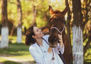 Horse with veterinarian
