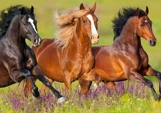 Horses running in meadow