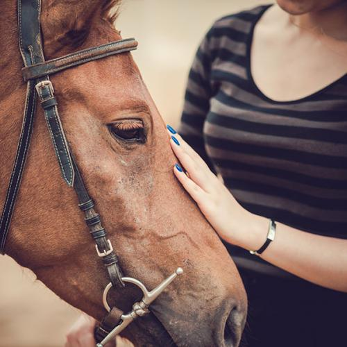 ADR Horse
