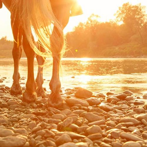 Horse walking by river